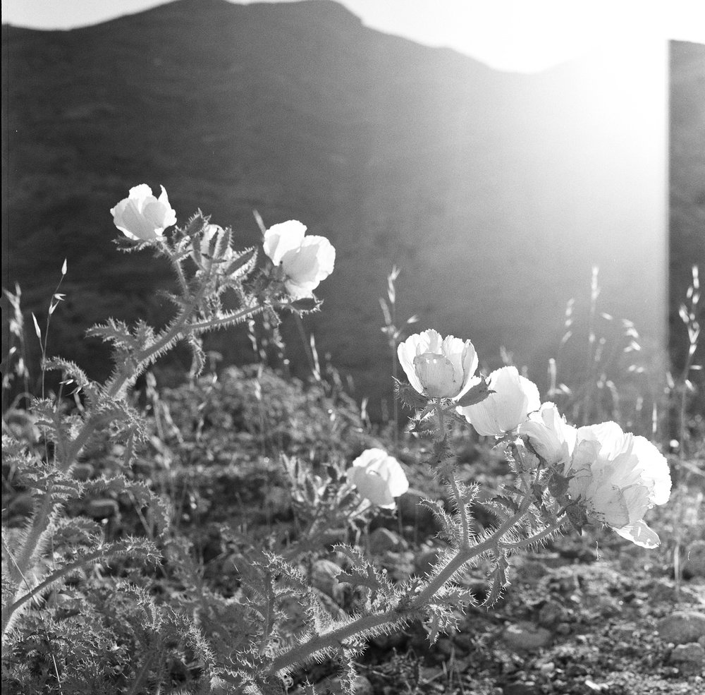 Ann Whittaker. Palm Springs, 2017. Film. Hasselblad.