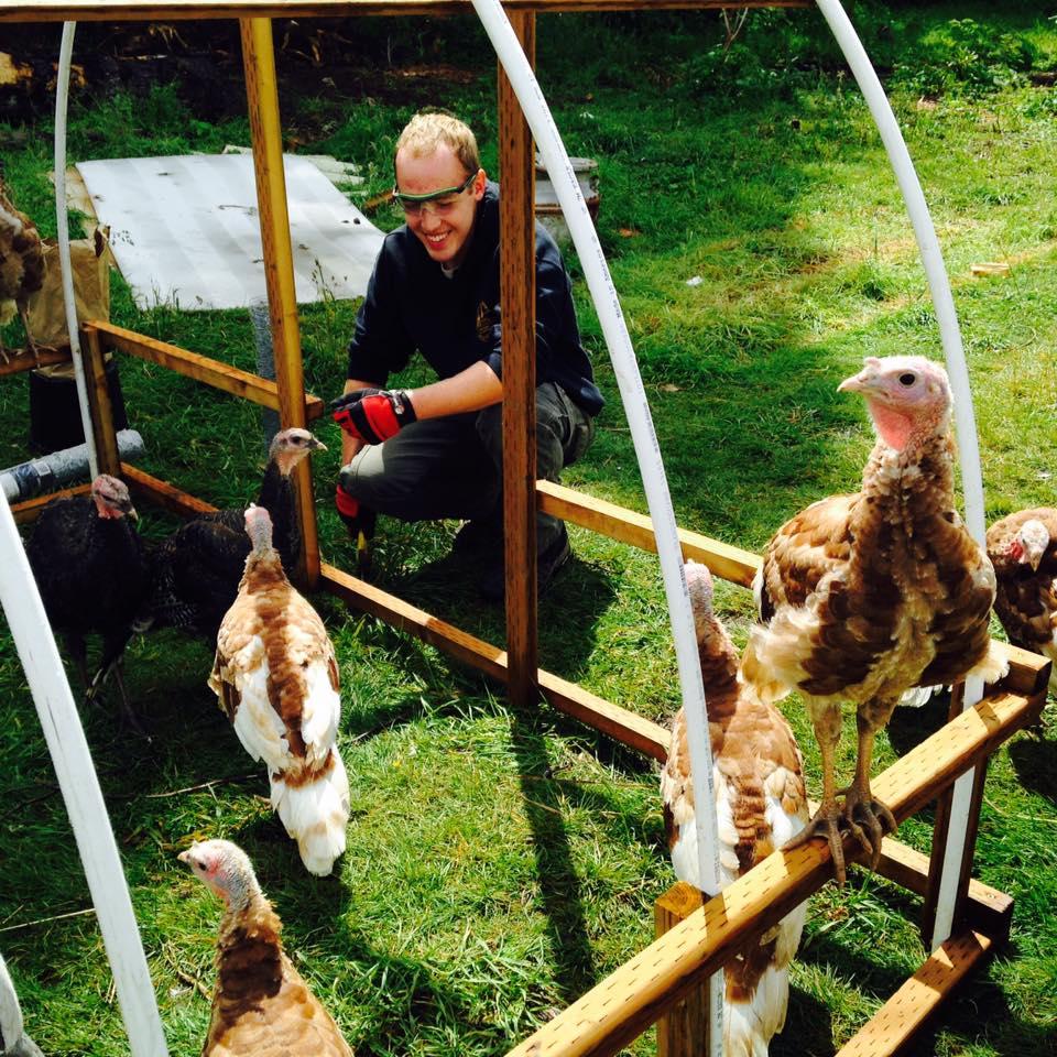 Turkeys are quite inquisitive