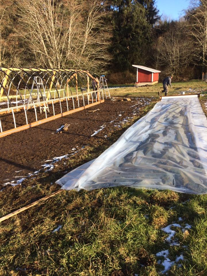Building hoophouse 3