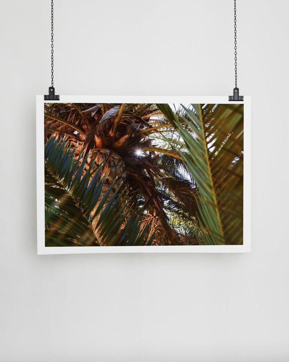 SOF PALM TREES II   Julia-Rosa Reis  50x70 cm  €189.30 EUR