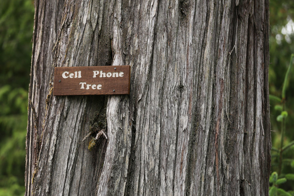 Cell Phone Tree Whale Pass Alaska