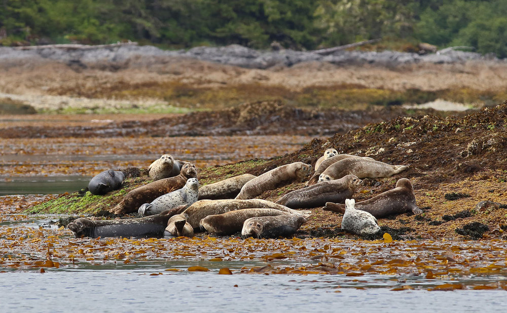 Seals are a common sight along the coast