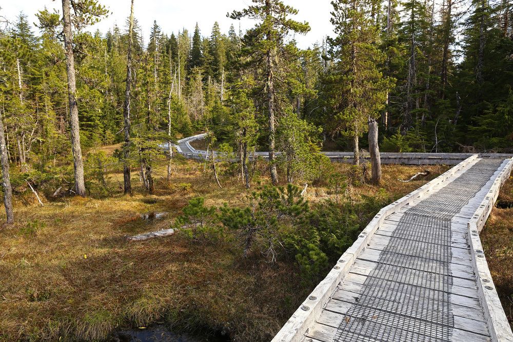 Beaver Falls Karst Trail muskeg Prince of Wales Island POW Southeast Alaska