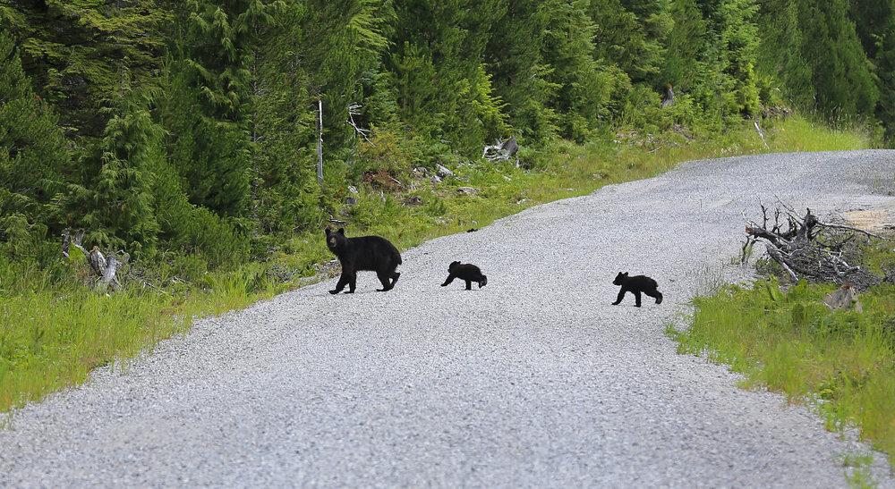 Bears_6760.jpg