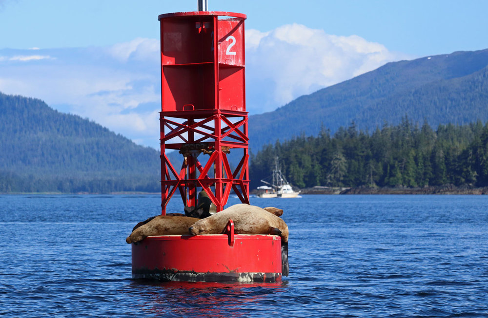 Sea lions sacked out in the sun