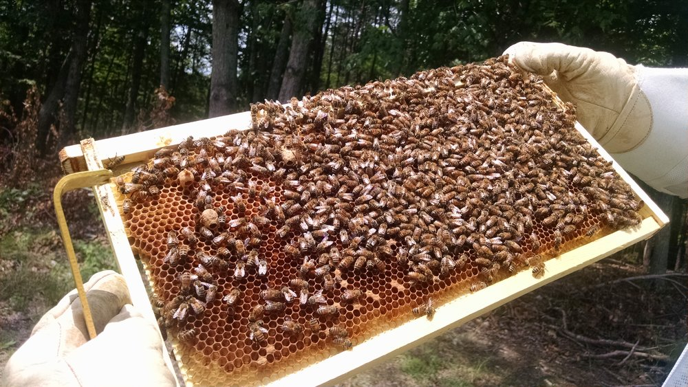 JUNE 2017 NEWSLETTER - Keep up with the upcoming news and events from the Piedmont Beekeepers Association!