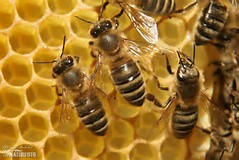 JULY 2017 NEWSLETTER - Keep up with the upcoming news and events from the Piedmont Beekeepers Association!