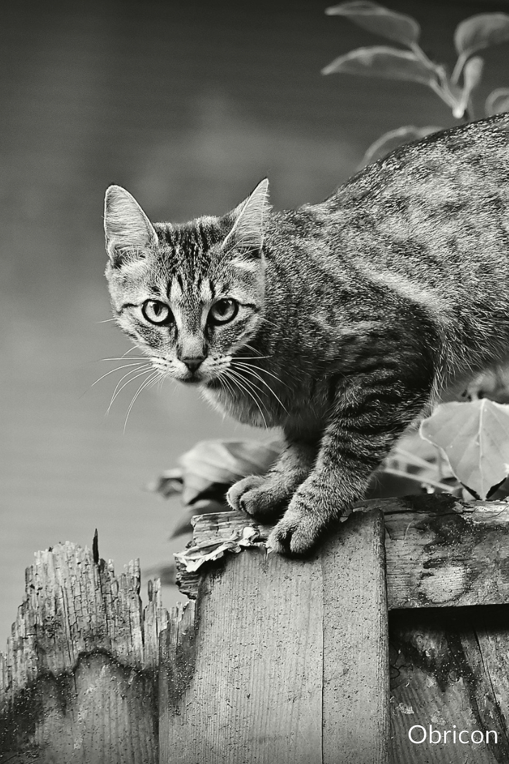 Cat on fence.jpg