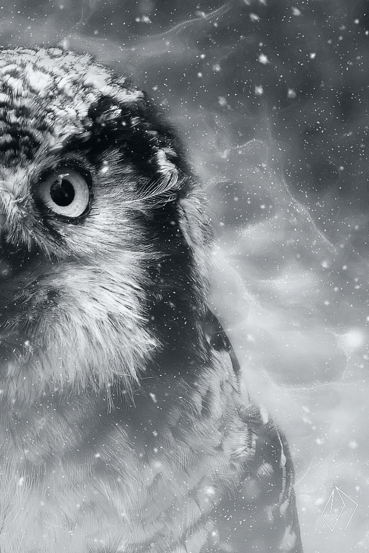#owl.jpg