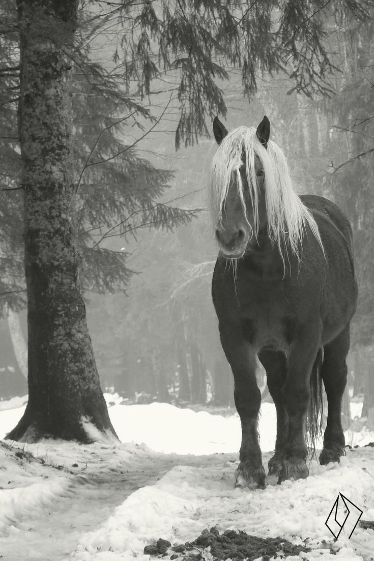 #horse in snow.jpg