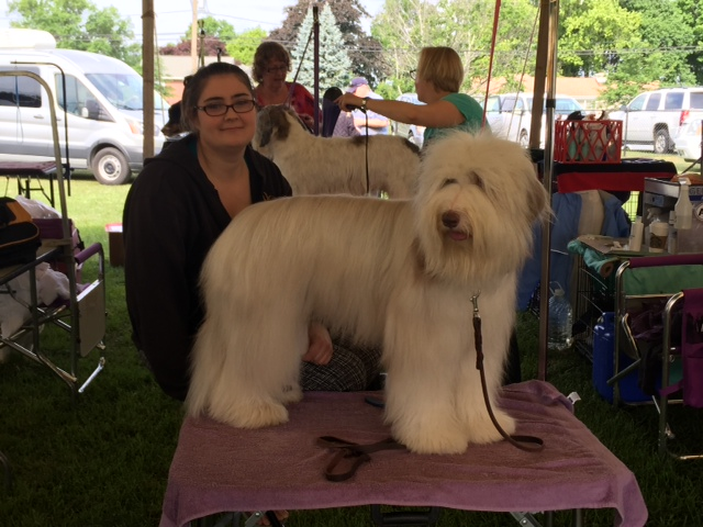 Grooming at the Greenwich Kennel Club Trials 2015
