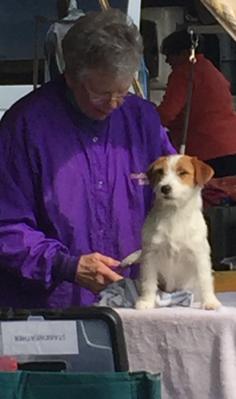 Puppy Prep at the Greenwich Kennel Club Trials 2015