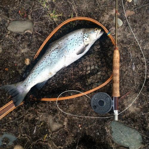 Brown trout catch.jpg