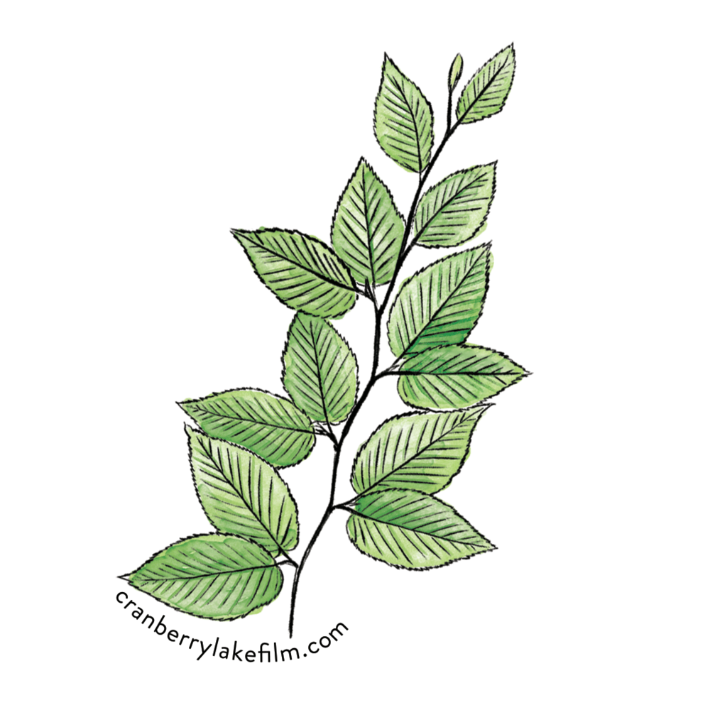 CranberryLake_sticker_Birch.png