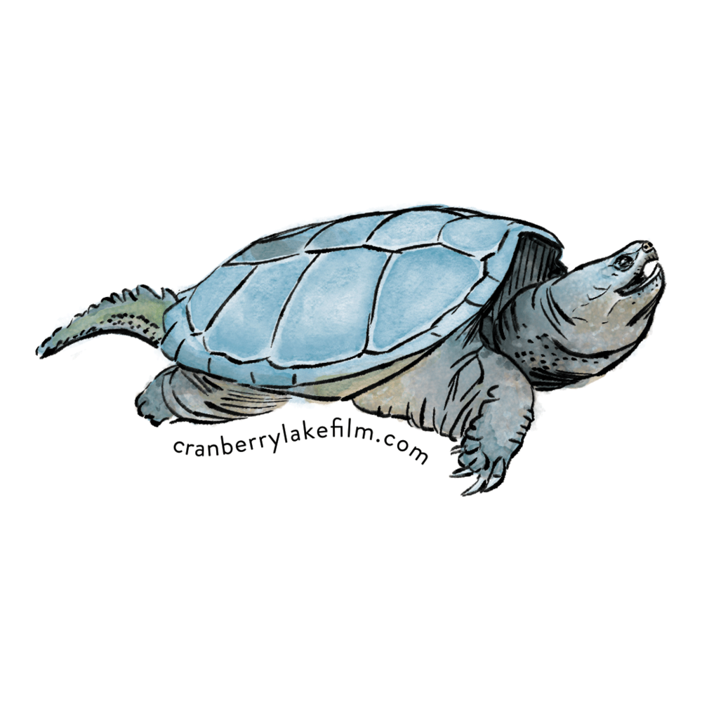 CranberryLake_sticker_Turtle.png
