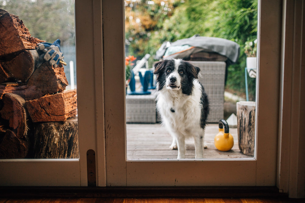 Dog outside glass door.