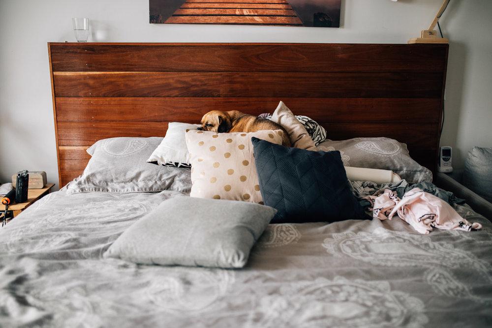 dog sleeping on bed (1 of 1).jpg