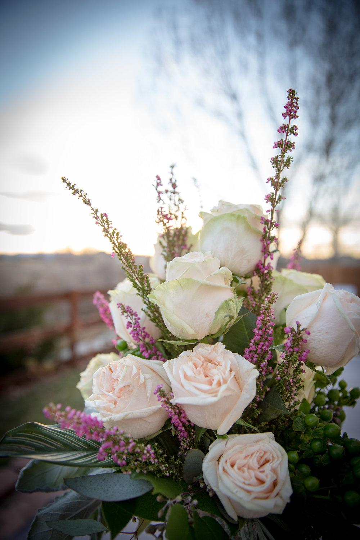 Flower Tribe Backyard-3342.jpg