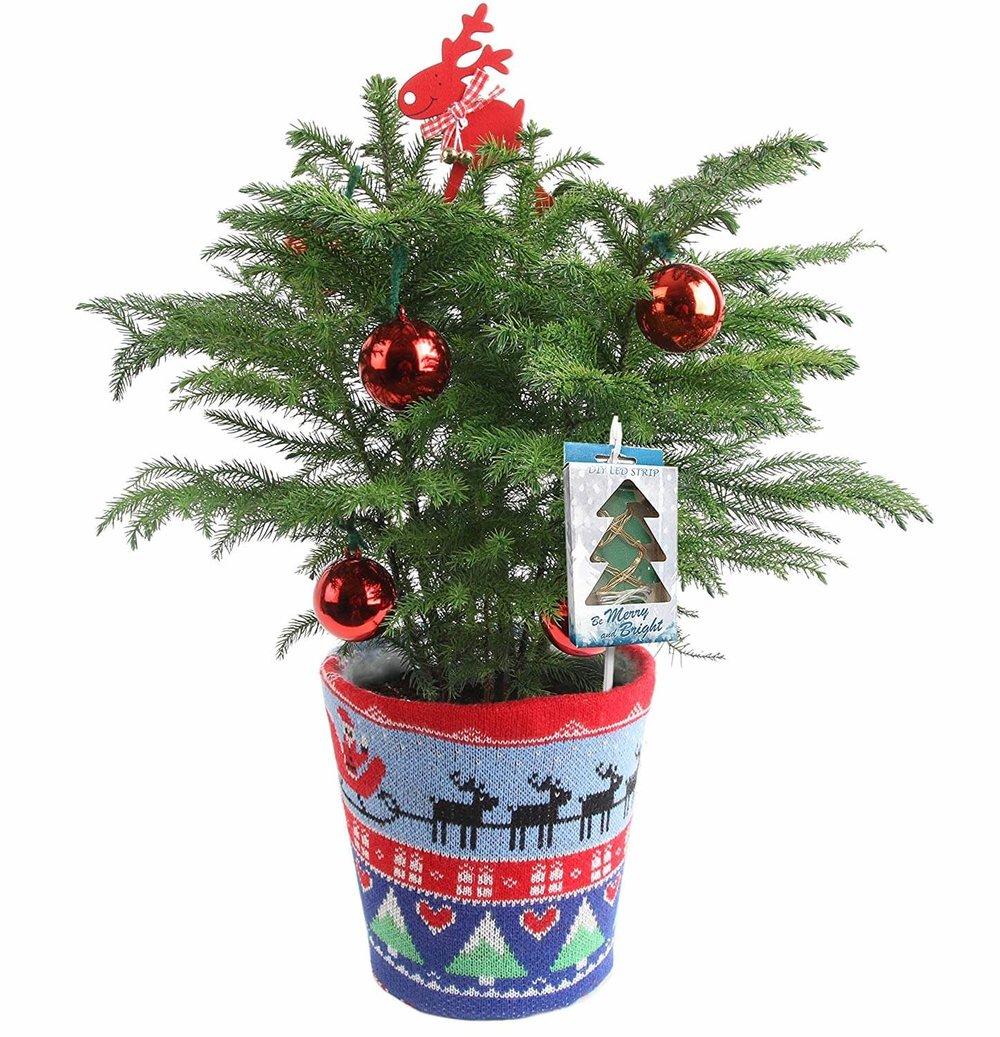 Costa Farms Live Ugly Christmas Sweater Christmas Tree