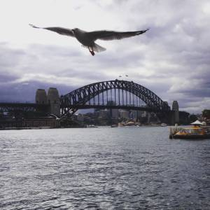 Afternoon in Sydney and all I could think of was P. Sherman 42 Wallaby Way, Sydney.