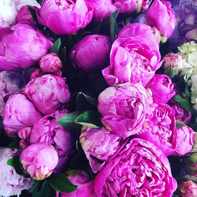 Oooh yeh! These won't last long 💕#flowersatkirribilli #freshflowers #love