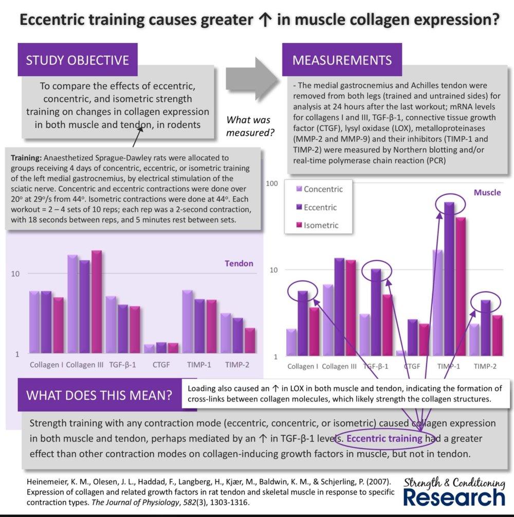 Eccentric - Muscle Collagen.jpeg