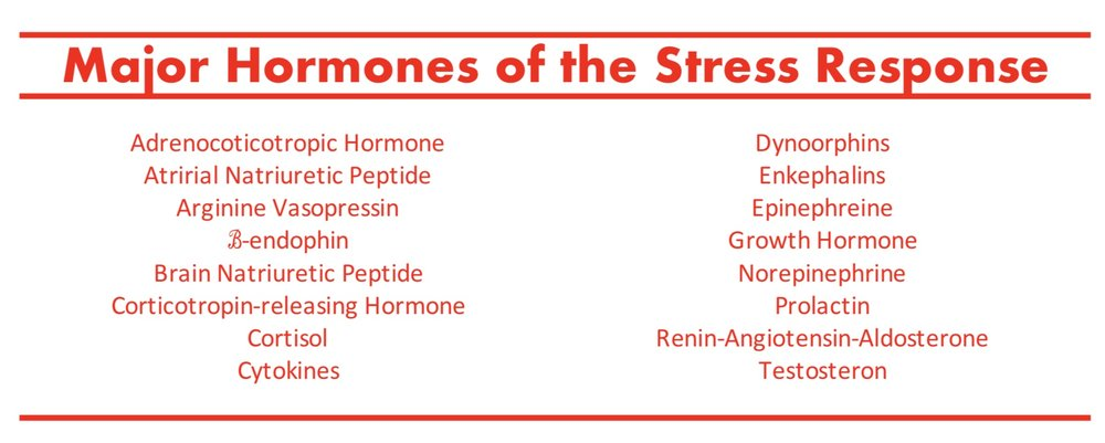 MajorHormones of StressResponse.jpeg