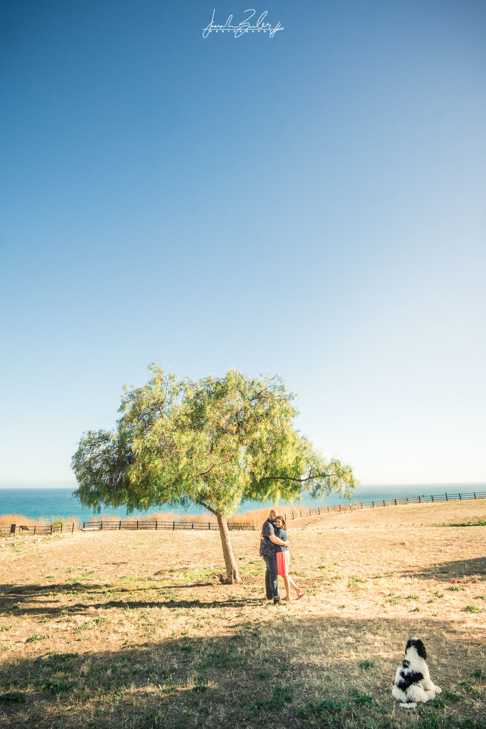 photographs of a couple holding each other under a tree With their puppy at abalone Cove in Palos Verdes for their engagement session