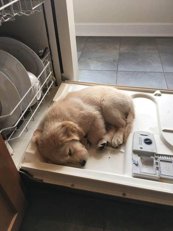 Puppy-Dishwasher.jpg