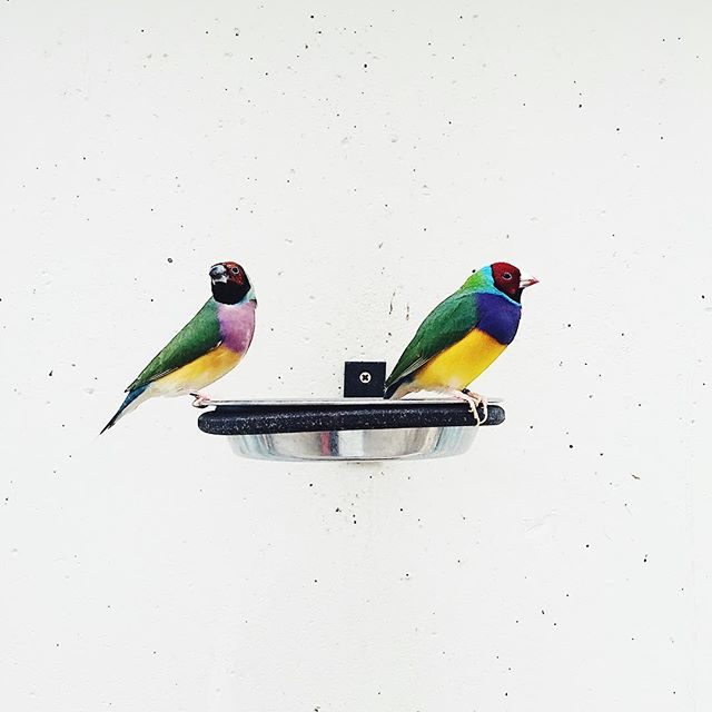 If I was a bird, I wanna be like this birds. . . #CMYK #colorpalet #pantone #nature #antwerpzoo #inspiration #everywhere #birds #beroepsmisvorming #artelies #mooimakerij #opstap #snapshot #graphicdesigner