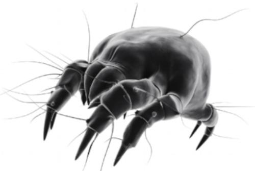Dust mite.jpg