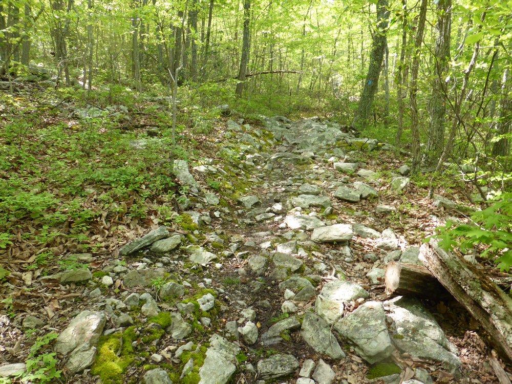 Rocks in trail.JPG