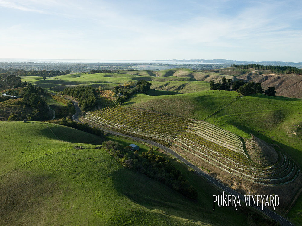 Crab Farm Pukera Vineyard