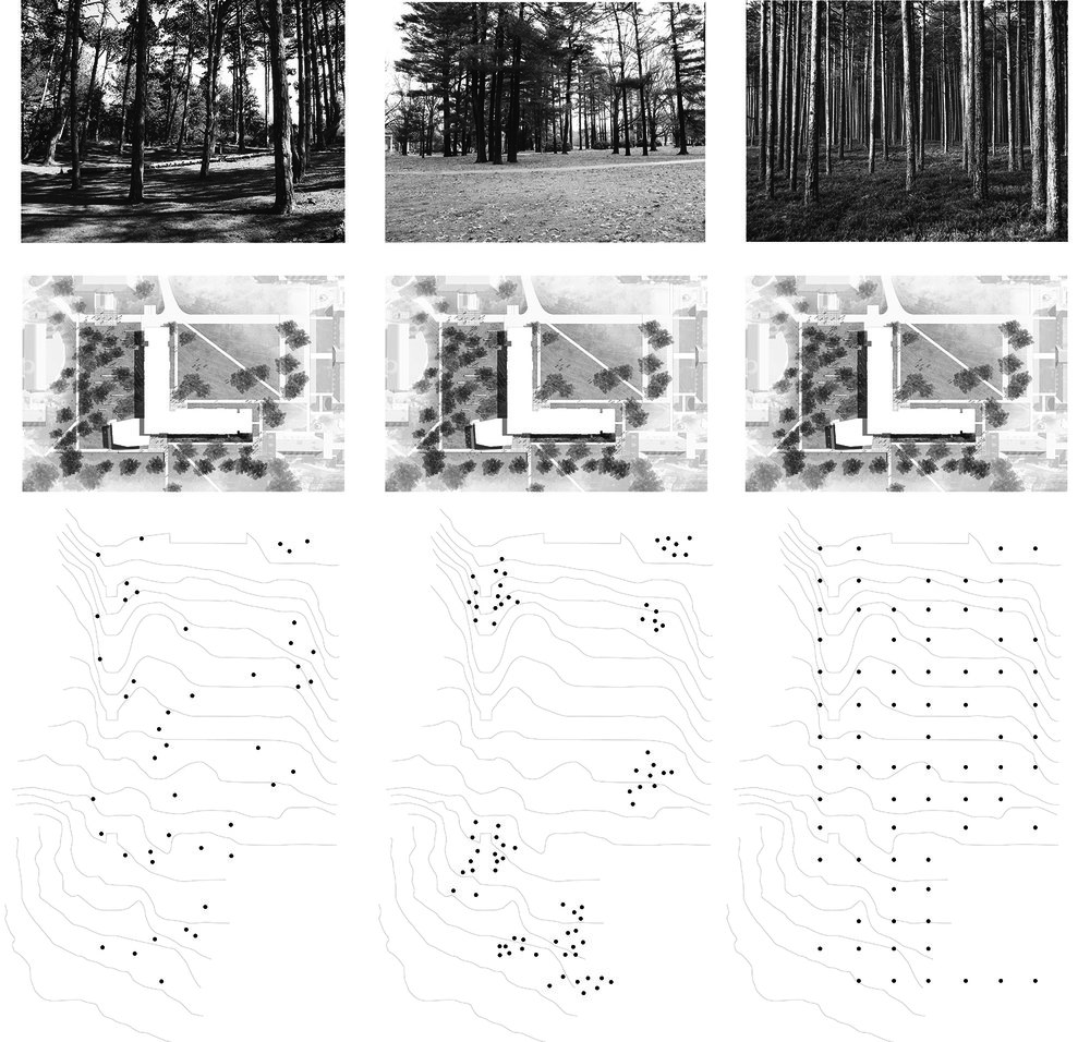 TREE STUDY mod.jpg