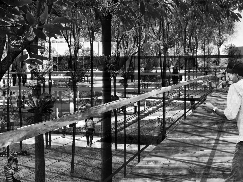park elevated walk tree canopy bw.jpg