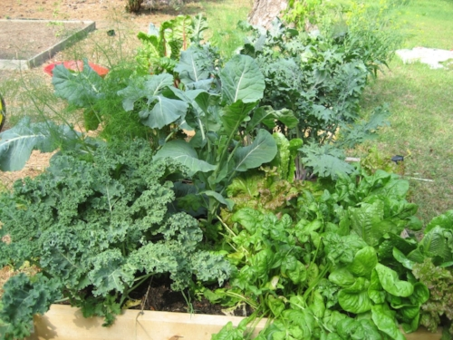 gardening6