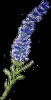 Lavender200.png
