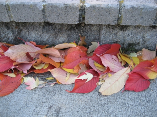 leaves-on-sidewalk-1024x768.jpg