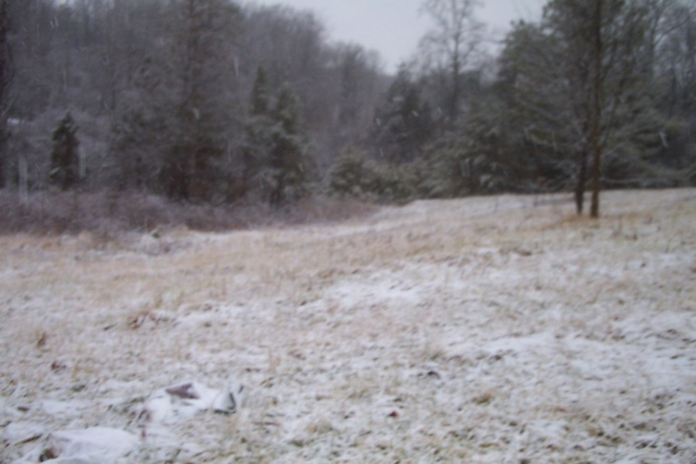 a gentle january snow 009.jpg