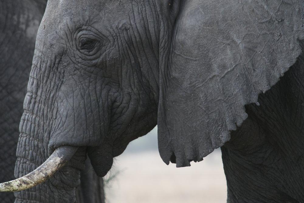 Africa Animal 2.JPG