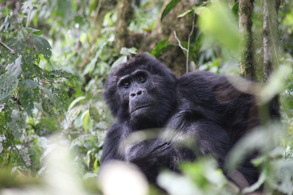 Africa Animal 5.JPG