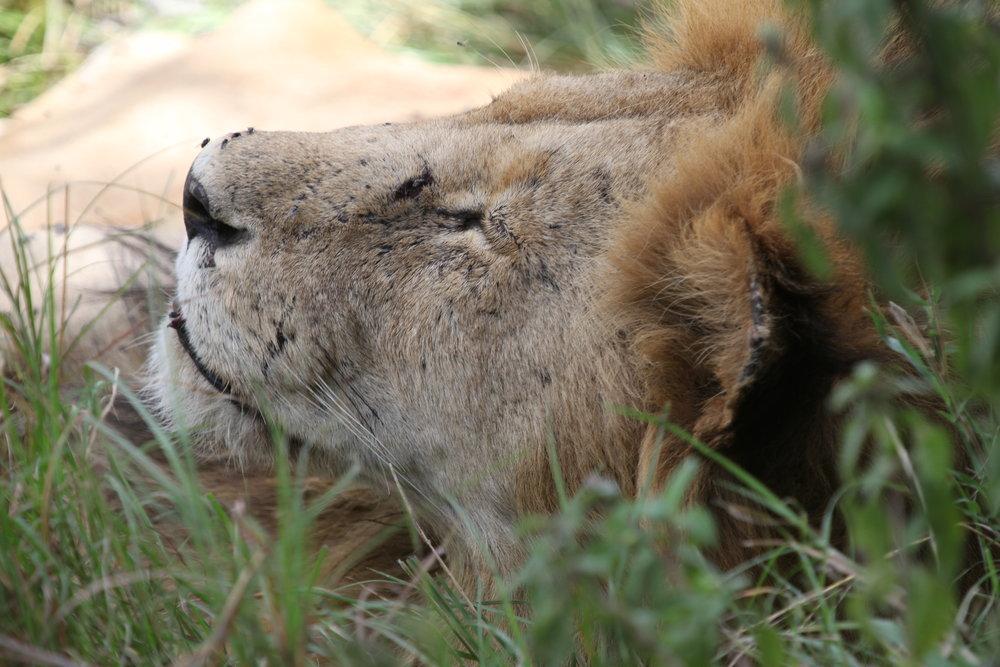 Africa Animal 11.JPG