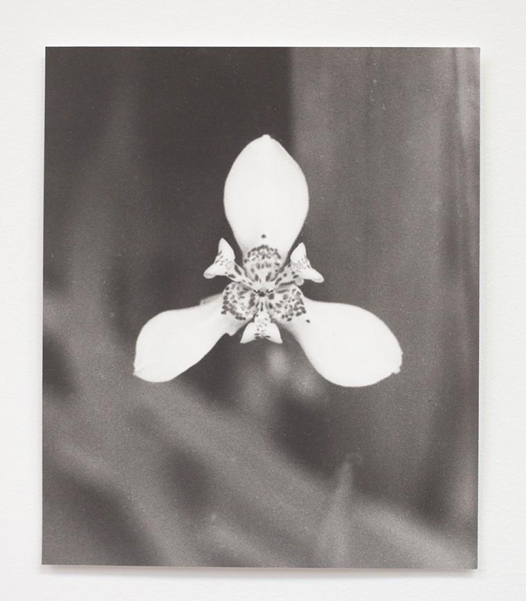 Jochen Lempert,  Numbers & Figures (Liliaceae),  2015.