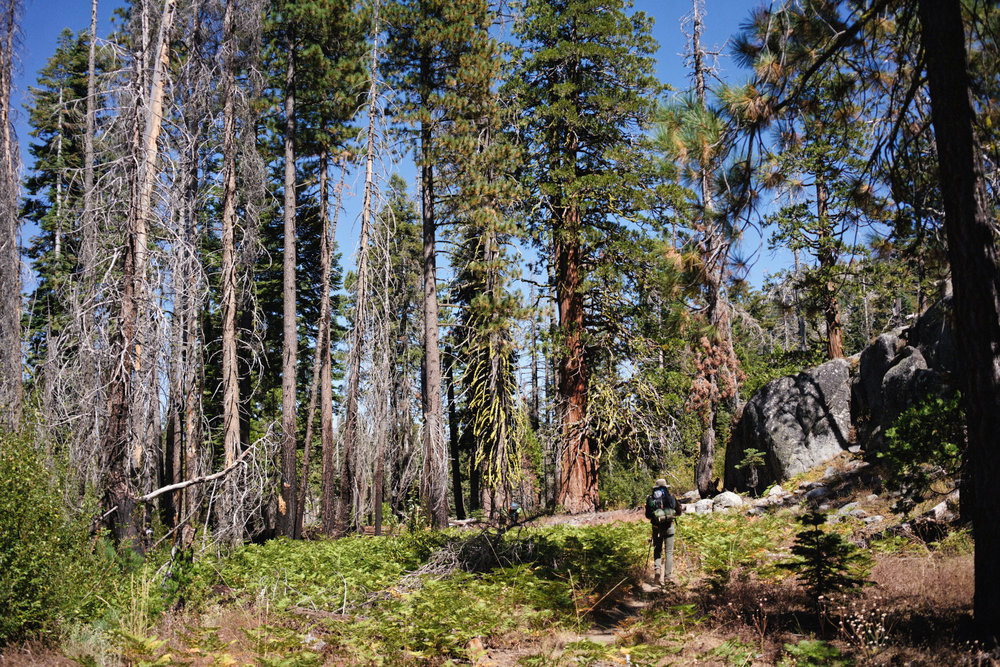 tuolumne-county-adventure-yosemite (58).jpg