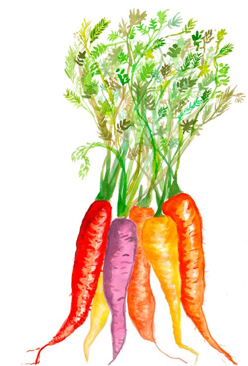 CarrotWebImage.png