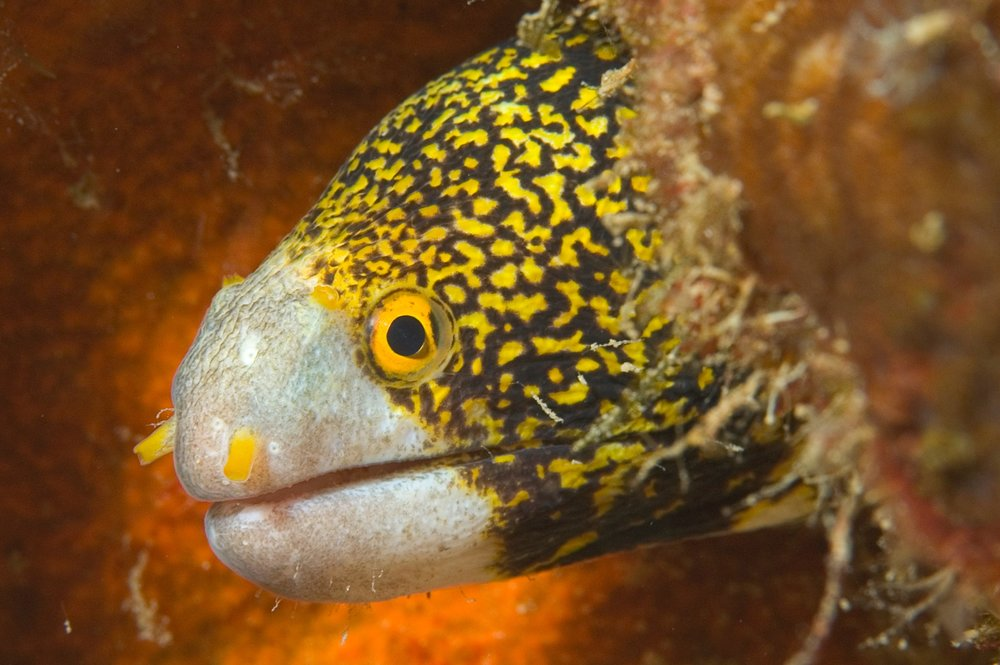 StarryMoray2.jpg