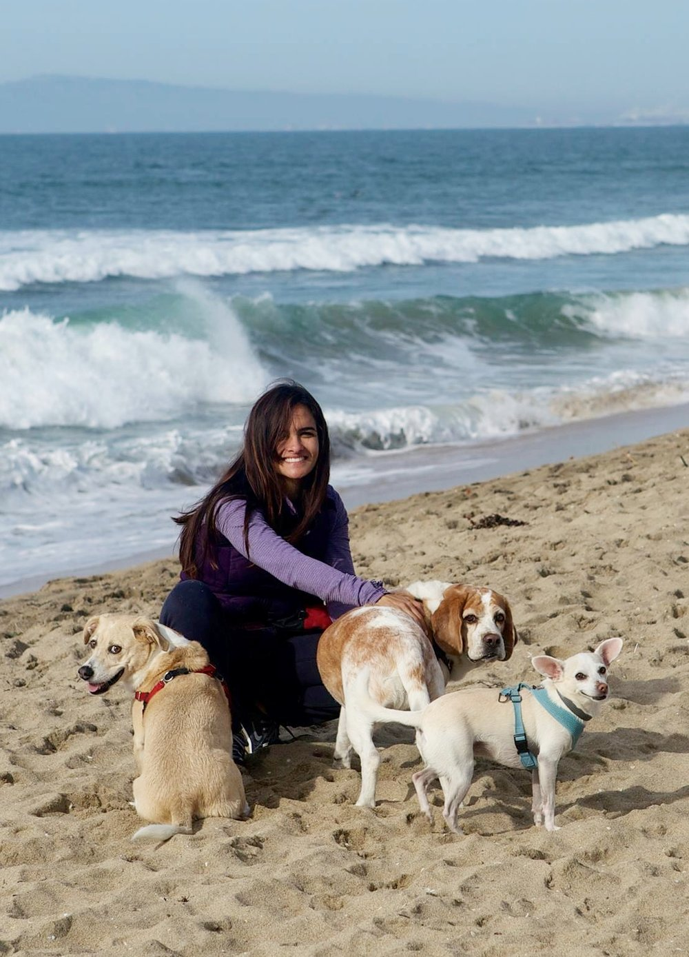 Mariela Rassouli dog trainer, KPA CTP, CPDT-KA, Nose Work Instructor, APDT, PPG, Force Free, Pet Sitters International.