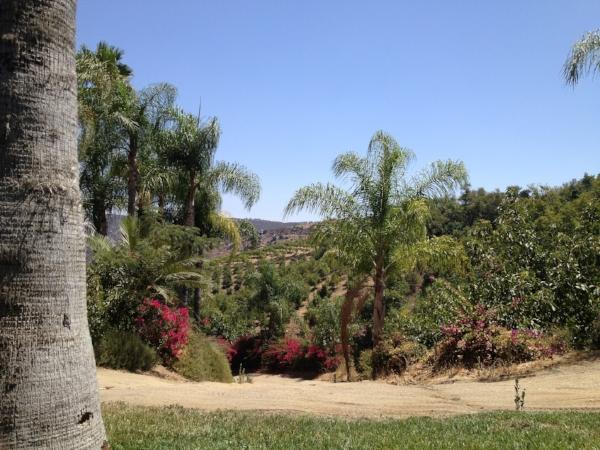 El Rancho del Sol.jpg