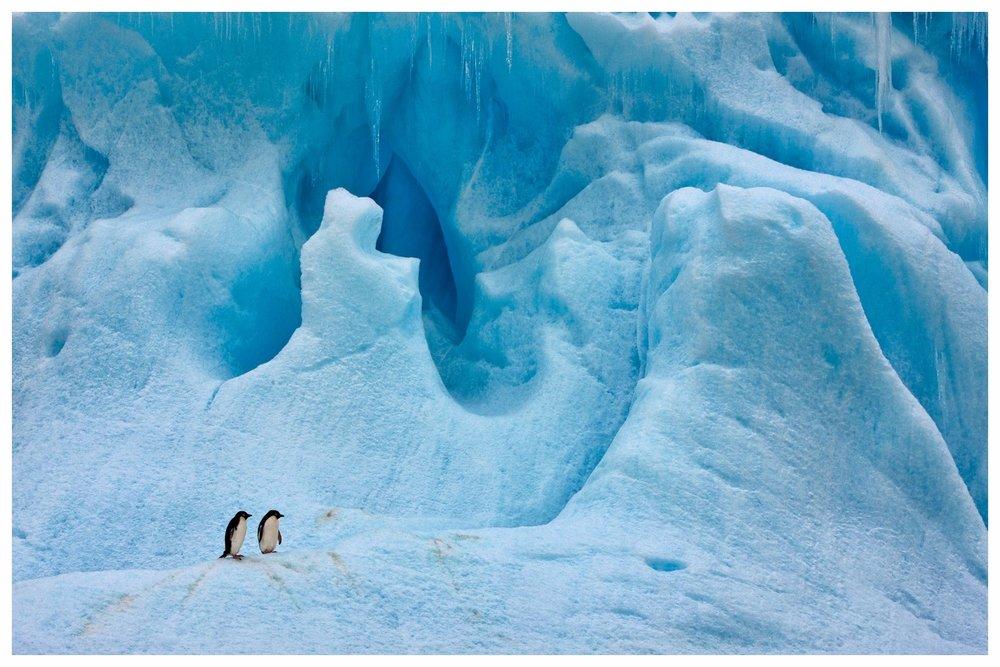 ARKTIS & ANTARKTIS- Faszination des ewigen Eises - Die Antarktis am Südpol ist so groß wie Australien und Europa zusammen, sie ist trockener als Arabien und höher gelegen als die Schweiz. An schönen Tagen ist es in der Heimat der Pinguine sonniger als in Kalifornien und doch kälter als im Gefrierfach eines Kühlschranks. Die Arktis am Nordpol ist dagegen ein von Eis bedecktes Meer. Sie ist die wilde Schatzkammer des Nordens, das Gebiet der Mitternachtssonne, der langen Polarnächte und das Reich der Eisbären. Diese beiden magischen Orte bieten Gästen Naturschauspiele, Erlebnisse und Aussichten, die in dieser Form nirgends auf der Welt zu finden sind. Wir organisieren Expeditionen grundsätzlich mit kleineren Schiffen, um eine ungezwungene Atmosphäre zu schaffen. Fernab von Captain's Dinner und Dresscode können Sie auch nur mit Ihrer Familie reisen - wir finden die perfekte Reiseplanung für Ihre Reise ins ewige Eis.