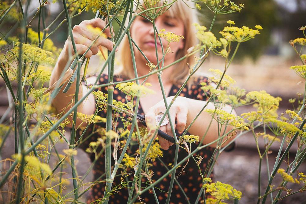 Snip snip – it's fennel pollen time!